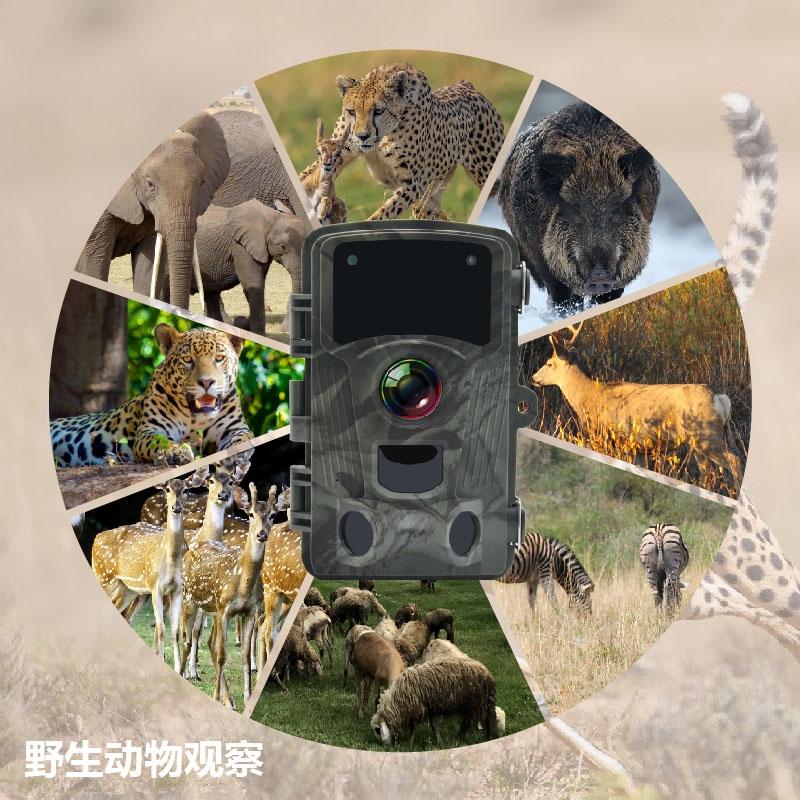 野生动物监控仪